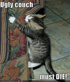 Don't like floral patterns on the FURniture: -Top 20 Funny kittens