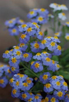 """https://flic.kr/p/6xgMm4 
