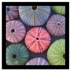Photographic Print: Variety of Colorful Sea Urchins on Wet Sand by Dimitrios : Sea Urchin Shell, Sea Shells, Sea Urchins, Shell Art, Shell Crafts, Patterns In Nature, Animal Patterns, Art Plastique, Sea Creatures