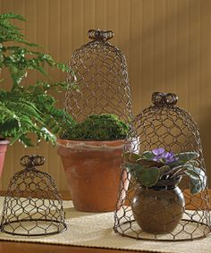 Chicken Wire Cloches Set