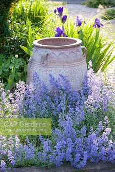 """Make a focal point in a Mediterranean style garden, with a large urn, surrounded here with Irises and Nepata fassenii """" Senior""""… garden landscaping focal points Garden Urns, Gravel Garden, Garden Landscaping, Large Garden Planters, Topiary Garden, Mediterranean Garden Design, Mediterranean Style, Pot Jardin, Italian Garden"""