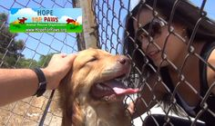 Hope for Paws is a animal rescue organization. We rescue abandoned and neglected animals. Paws Rescue, Good Buddy, Animal Rights, Fleas, Make You Smile, Animal Rescue, Animal Shelter, Yorkie, Pet Birds