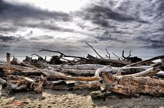A Maremma Tuscany beach between Marina di Grosseto and Castiglione della Pescaia in November after the storm has washed the driftwood ashore