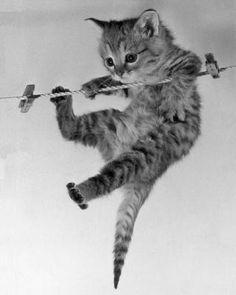 Kitten on a clothesline by Erik Parbst.