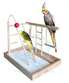 Súvisiaci obrázok Bunk Beds, Parrot, Bird, Animals, Furniture, Home Decor, Budgies, Playground, Parrot Bird