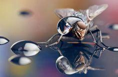 http://blogdiskdigitais.com.br/fotos-em-macro-de-insetos-com-gotas-de-agua-na-cabeca/