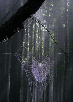 ˚Deep Forest Web - Gorgany, Carpathian Mountains, Ukraine