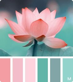 Blush, Pink , Aqua and Teal colour palette Color Schemes Colour Palettes, Colour Pallette, Color Palate, Color Trends, Color Combos, Summer Color Palettes, Room Colors, Paint Colors, Pastel Colors