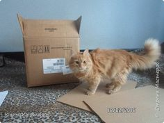 Приветствую всех жителей СМ. Наш любимец - Крысилий очень любит всякие коробки, пуфики и диваны, вот решила сотворить ему свой собственный. это мой первый кошачий дом. размер: Длина - 53см, высота - 55 см, ширина - 32 см. фото 2