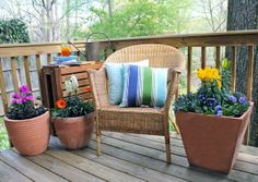 Just add water for an instant garden. Need color in a small space or on a bare apartment balcony? Click through for tips on planting a quick-and-easy container garden.