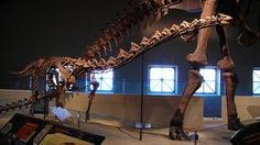 Paleontologists Are 3-D Printing Life-Sized Dinosaur Robots