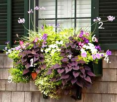 Plant a Better Window-Box Garden Trailing variegated ivy and purple sweet-potato vine ground an exuberant display of flowering society garlic, petunias, angelonia, pink nicotiana, and white impatiens. Container Flowers, Container Plants, Container Gardening, Succulent Containers, Window Box Flowers, Flower Boxes, Potato Vines, Potato Vine Plant, Window Boxes