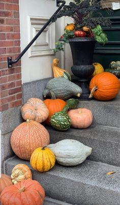 Beacon Hill, Pumpkin, Vegetables, Food, Pumpkins, Essen, Vegetable Recipes, Meals, Squash