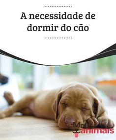 A necessidade de dormir do cão   A necessidade de #dormir do #cão é superior a do ser humano e requer mais de 50% de cada #dia. #Saúde