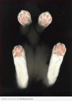 Cat Feet - What a creative photo!  Great perspective!