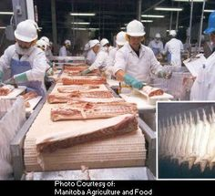 Pork Processing Assembly Line--Manitoba