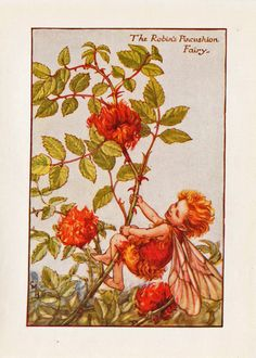 Flower Fairies: The ROBIN'S PINCUSHION FAIRY Vintage Print c1930 by Cicely Mary…