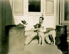 Buster and dogs.