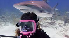 Ellen DeGeneres Show Writer Goes Scuba Diving With Sharks in The Bahamas