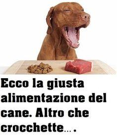 Ecco la giusta alimentazione del cane.Altro che crocchette…. Little Puppies, Little Dogs, Animals And Pets, Cute Animals, Corso Dog, Cane Corso, Dogs Of The World, Dog Care, I Love Dogs