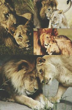 Every king needs his queen.