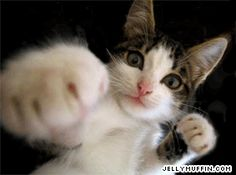 Best Cat Gifs of the Week - We Love Cats and Kittens I Love Cats, Crazy Cats, Cute Cats, Cat Fun, Funny Animal Pictures, Funny Animals, Cute Animals, Funniest Animals, Pet Pictures