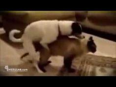 смотреть онлайн прикол собака и кошка