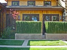 Plant Horsetail (Equisetum Hyemale) in contained planters for privacy walls and no worry of spreading this highly invasive plant modern exterior by Stephanie Ann Davis Landscape Design Privacy Screen Plants, Garden Privacy, Privacy Landscaping, Garden Fencing, Garden Pond, Privacy Hedge, Privacy Fences, Garden Beds, Outdoor Privacy