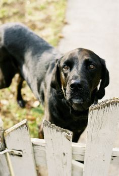 Our home is protected by the Edgar Home Security System. If you enter our property, you will immediately by jumped on and licked in the face. ~ Houston Foodlovers