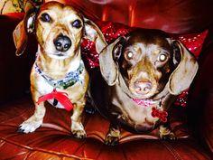 Watson and Loretta