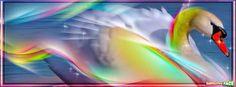 Oca de arcoiris - Portadas para Facebook