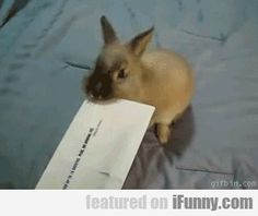 using your bunny the right way! GIF