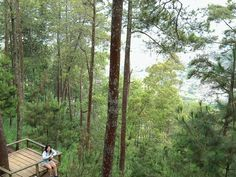 Omah kayu,malang Indonesia
