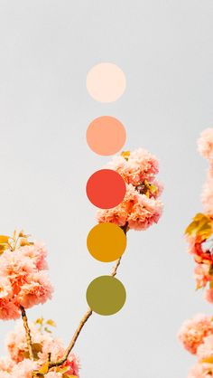 Spring colors are in the air! Cherry blossom color palette designed by Amari Creative.  #color #colorpalette #palettesthatpop #colorinpso #brandcolors #AmariCreative #creativedesign #graphicdesign #graphicdesigner #brandstrategy #brandstrategist #spring #cherryblossom #springcolors #pink #blushpink