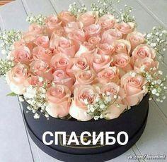 Ирина Сиваева-Пирогова