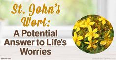 Learn why St. John's Wort is unique and how it can help improve your health and clear your mind of worry.