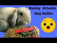 Hay Roller and Teddy Bear Destruction - YouTube Chinchilla Toys, Rabbit Toys, Destruction, Bunny, Teddy Bear, Youtube, Animals, Rabbit, Animales