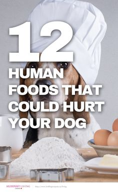 Think these foods are okay for your dog? Think again http://huff.to/1gvuxB5 #pets #dogs