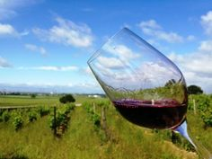 Séjour oenologique au coeur du vignoble de Saumur