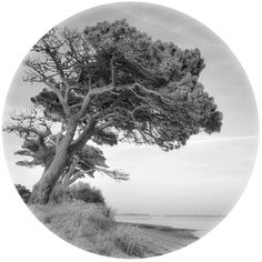 Desert Island Disc Art Print ($21) ❤ liked on Polyvore featuring home, home decor, wall art, island home decor, island wall art and photography wall art
