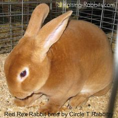 3984fac8 42 Best Rabbits images in 2019 | Rabbits, Bunnies, Bunny