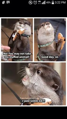 20 Funny Animal Jokes and Memes humor Funny Animal Memes, Cute Funny Animals, Funny Animal Pictures, Cute Baby Animals, Cat Memes, Hilarious Memes, Funny Cute, Animal Pics, Funny Pics
