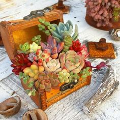 10+Amazing+Upcycled+Planters+That+Show+Off+Your+Succulents