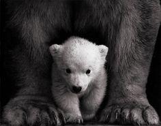 baby bear...