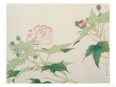 Hibiscus Art Print by Hsi-Tsun Chang at Art.com