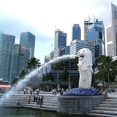 Merlion Park, Singapore #Singapore #Merlion #skyscrapers #instatravel #travelgram #traveltheworld #traveling #travelling #traveler #traveller #igtravel #view #explore #outdoors