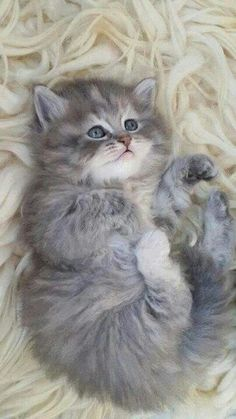 such a cute kitten