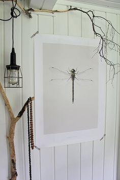 Dragonfly from hagedornhagen