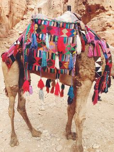 Lots of pattern, color, tassels - on a camel!