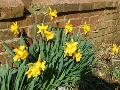Attachment Mummy: Spring at Last!